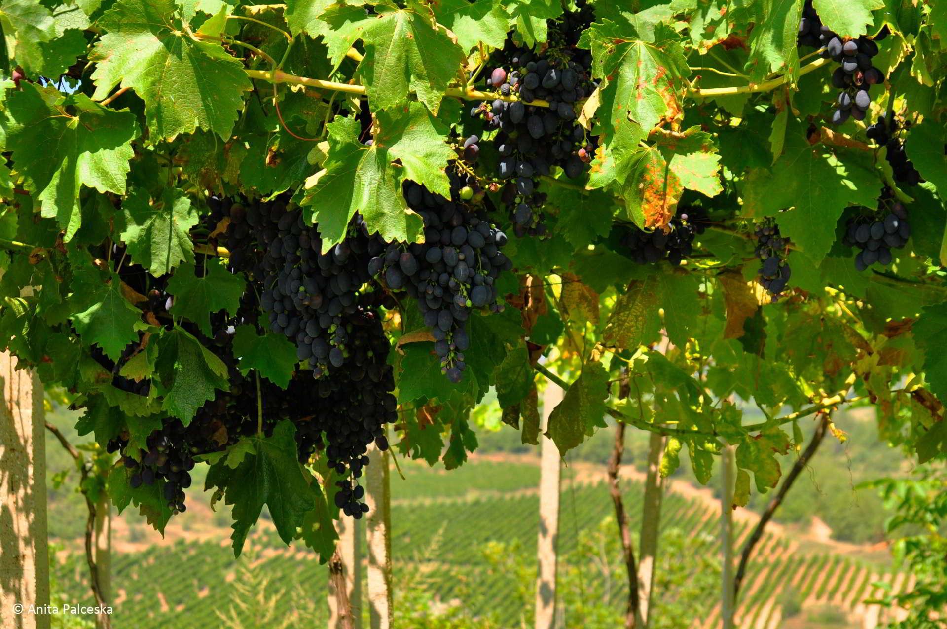 Grape wine and dine
